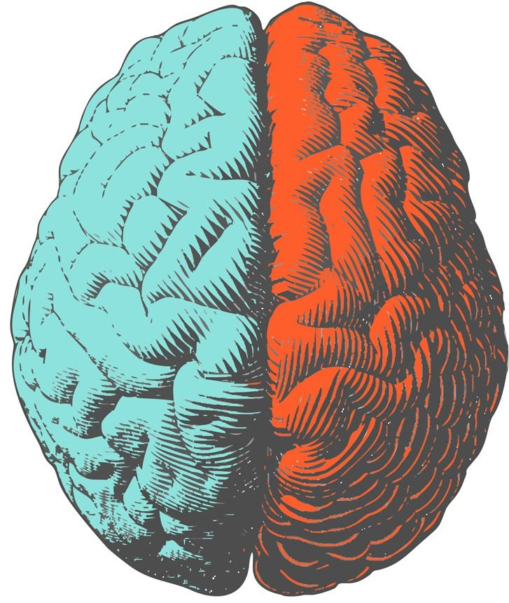 Dessin d'un cerveau